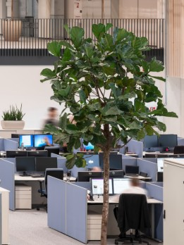 Die unkonventionellen Working Spaces sind mit echten Bäumen großzügig bepflanzt.<br><span class='image_copyright'>ATP/Pierer</span><br>